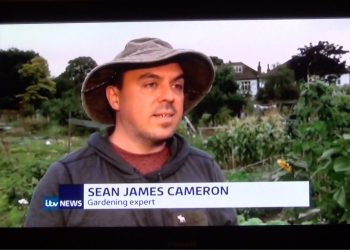 When ITV News come to interview me about allotments and waiting lists
