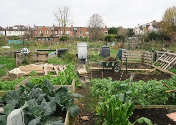 Weeding the allotment
